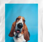 Basset Hound T Shirt Portrait WHITE Dog T Shirt Portrait T Shirt