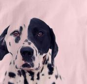 Dalmatian T Shirt Portrait PINK Dog T Shirt Portrait T Shirt