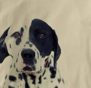 Dalmatian T Shirt Portrait TAN Dog T Shirt Portrait T Shirt