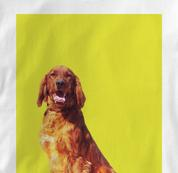 Irish Setter T Shirt Portrait WHITE Dog T Shirt Portrait T Shirt